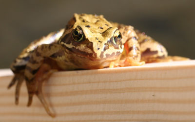 Frog on plank