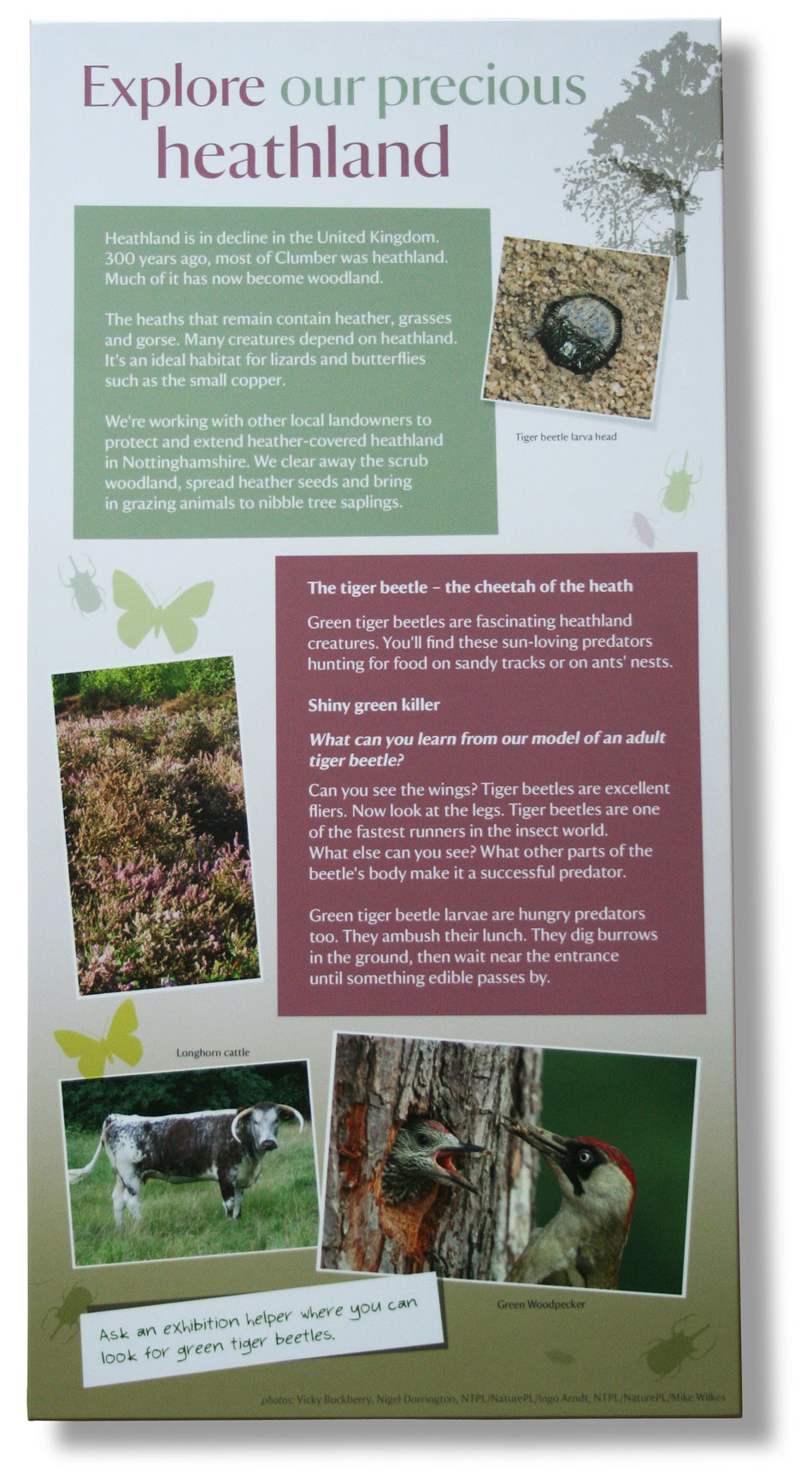 Interpretation copywriter: visitor panel about heathland at Clumber Park