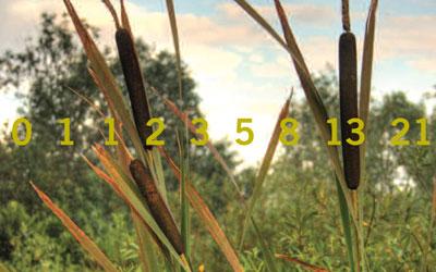 Reedmace overlaid with the Fibonacci series